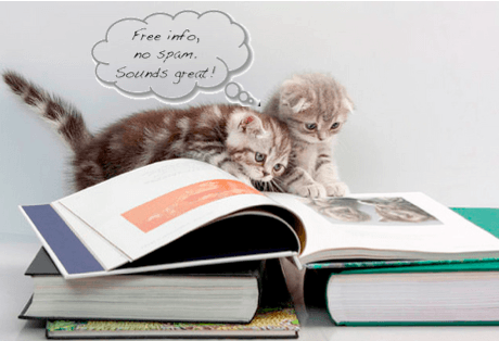 cats reading newsletter
